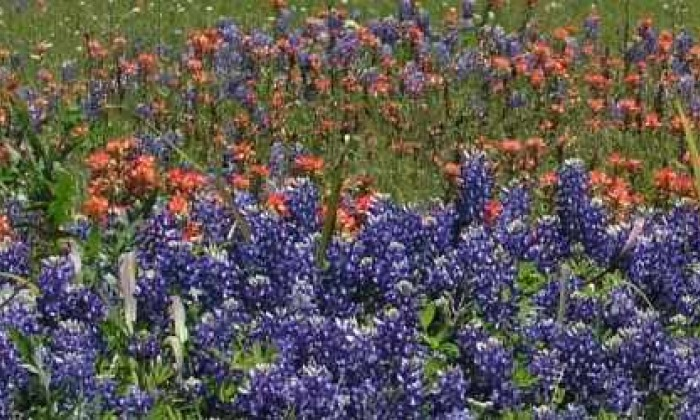 800X250 Wildflowers L