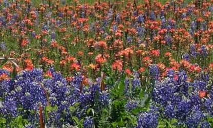 800X250 Wildflowers R